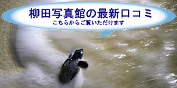 柳田写真館・横須賀本店・最新口コミ